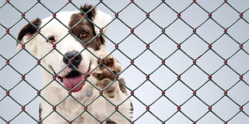 Cani abbandonati3-800x400