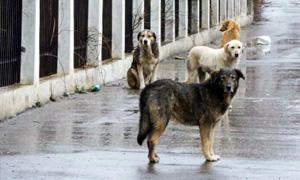 Cani abbandonati4-300x180