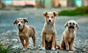 Cani abbandonati5-300x180