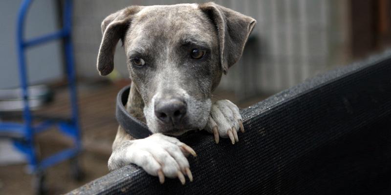 Cani abbandonati6-800x400