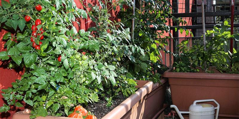 Orto sul balcone-1-800x400