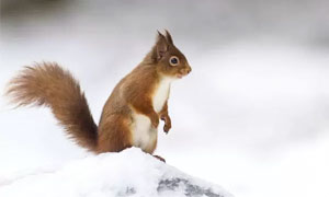 animali-sopravvivono-freddo1-300x180