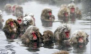 animali-sopravvivono-freddo3-300x180