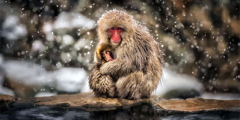 animali-sopravvivono-freddo3-800x400