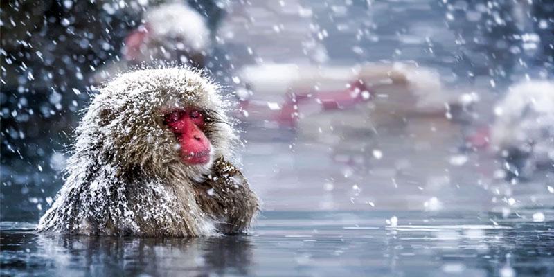 animali-sopravvivono-freddo4-800x400