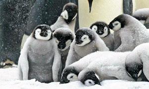 animali-sopravvivono-freddo5-300x180
