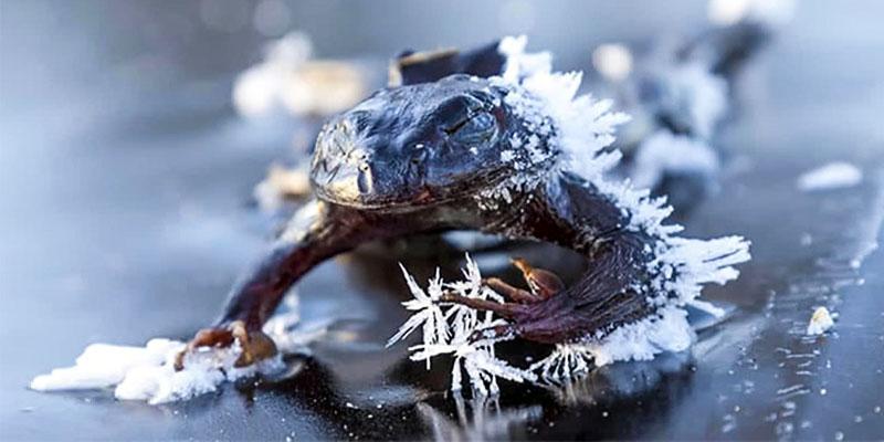 animali-sopravvivono-freddo8-800x400