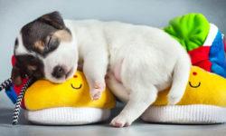 cane-dorme-2-800x400