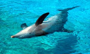 delfino-300x180