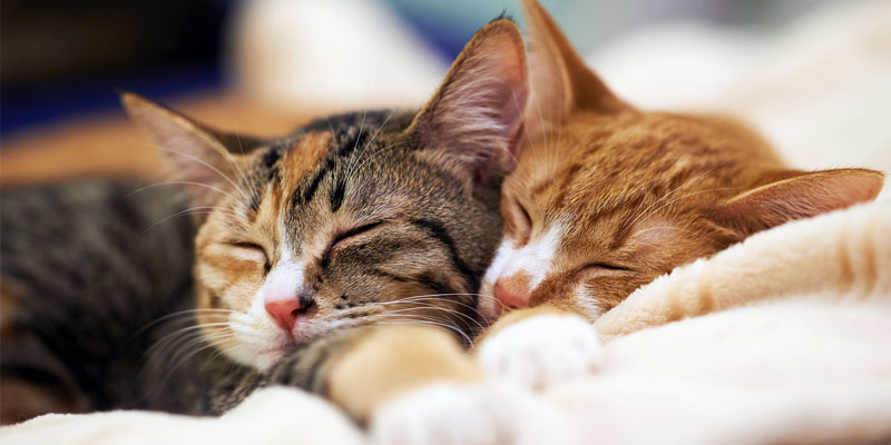 gatti-dormono-1-800x400