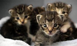 gatto-1-personalit-felina-300x180