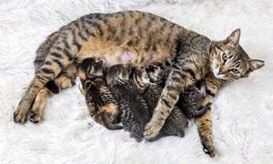 gatto-2-personalit-felina-300x180