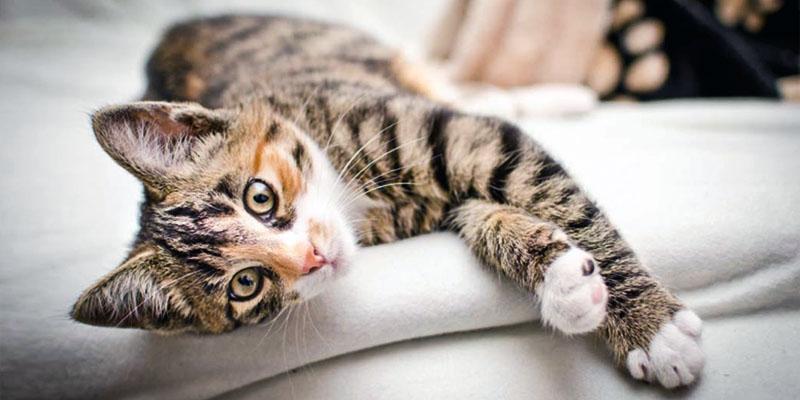 gatto-2-personalit-felina-800x400