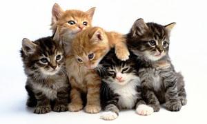gatto-3-personalit-felina-300x180