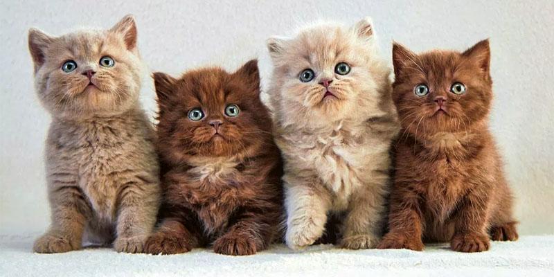 gatto-3-personalit-felina-800x400