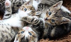 gatto-4-personalit-felina-300x180