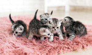 gatto-5-personalit-felina-300x180