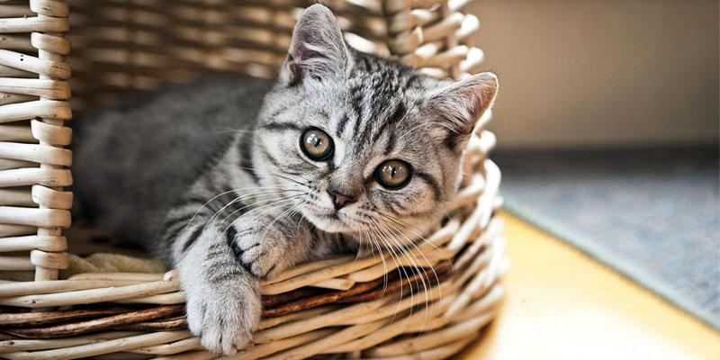 gatto-6-personalit-felina-800x400