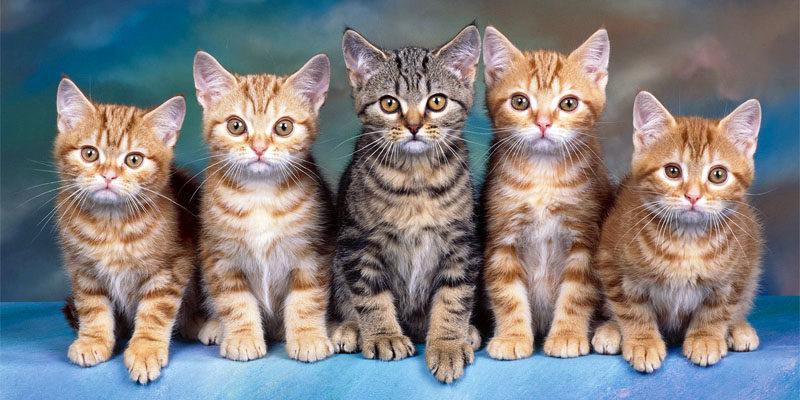 gatto-9-personalit-felina-800x400
