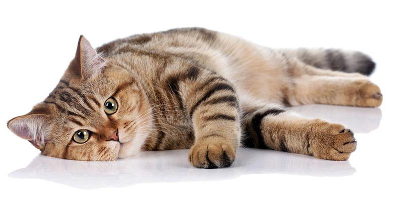 gatto-obeso-2-800x400