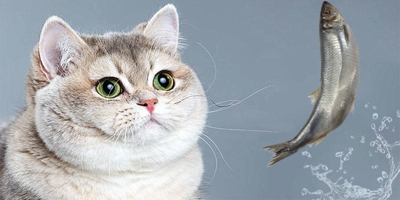 gatto-obeso-5-800x400
