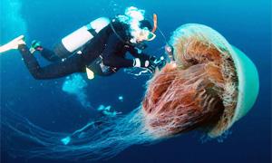 medusa-3-300x180