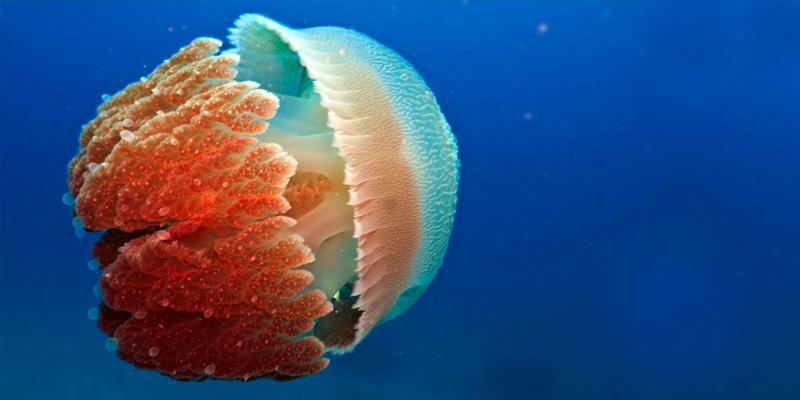 medusa-4-800x400
