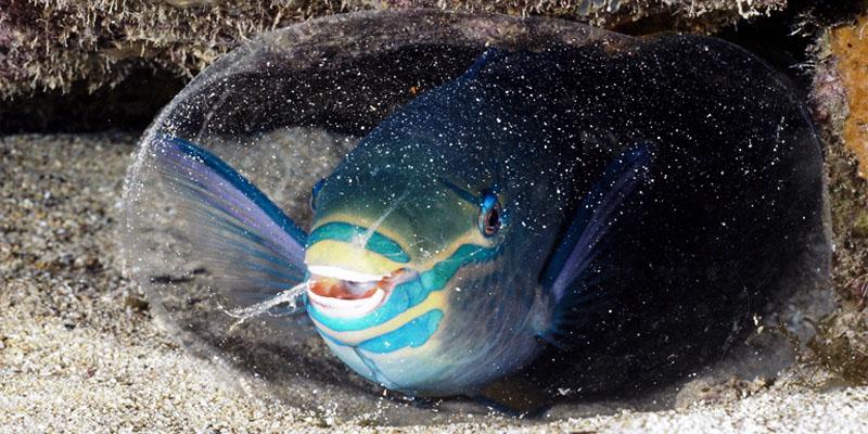 pesce-pappagallo-800x4000