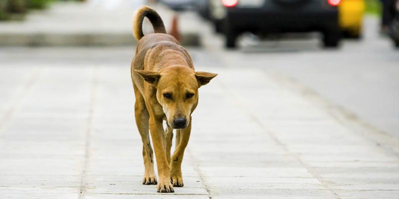cane-abbandonato-2-800x400