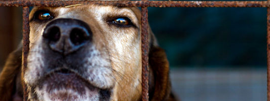 cane-abbandonato-3-800x400