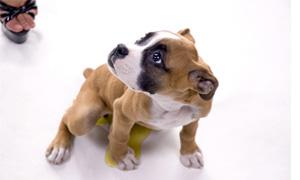 cane fa pipi in casa-3-300x180