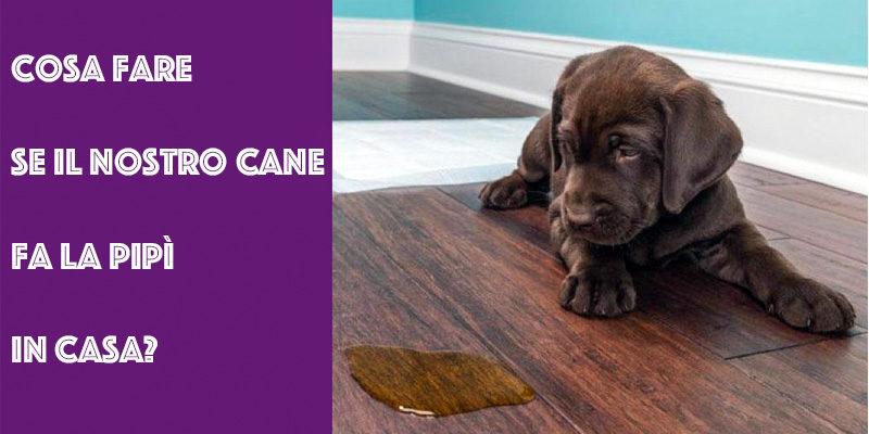 cane fa pipi in casa-3-800x400