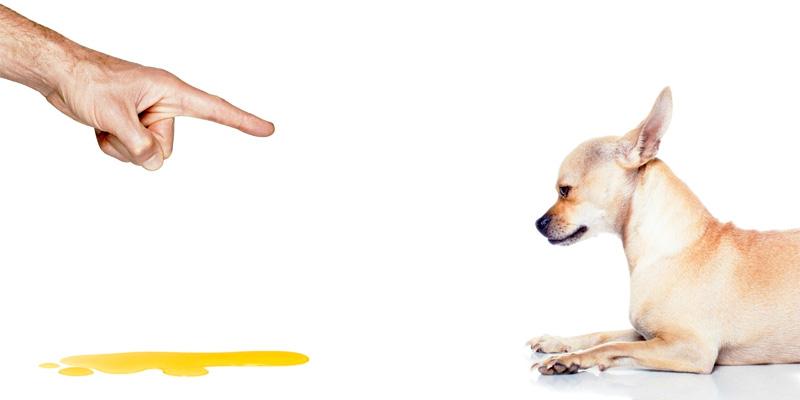 cane fa pipi in casa-7-800x400
