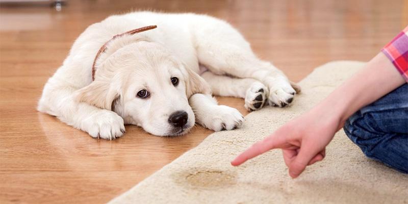 cane fa pipi in casa-9-800x400