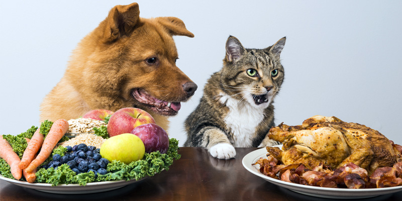 cani e gatti alimentazione-2-800x400