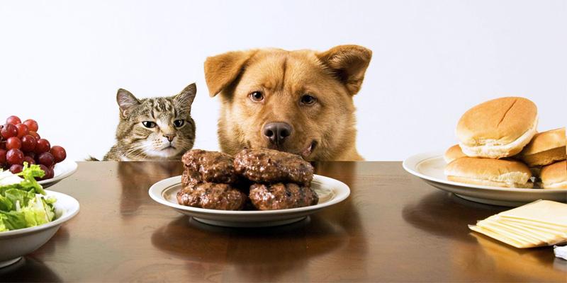 cani e gatti alimentazione-3-800x400