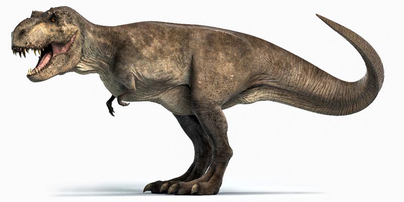 t-rex-1-800x400