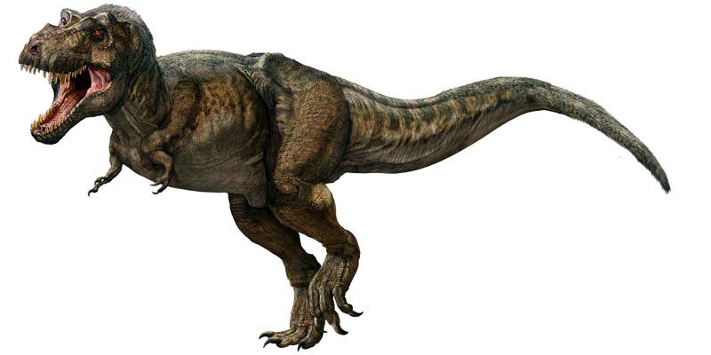 t-rex-2-800x400