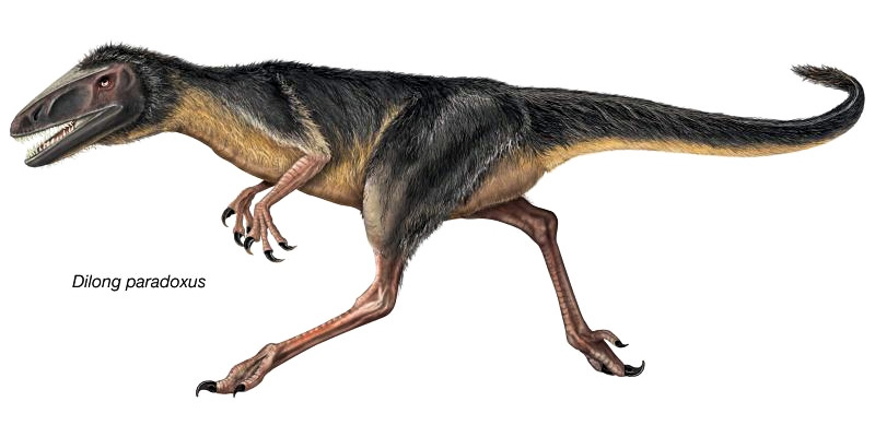 t-rex-7-800x400