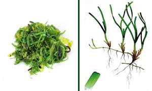 alga-wakame-300x180