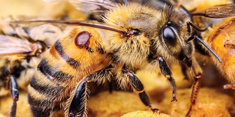 ape contaminata-800x400