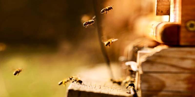 api-danzanti-5-800x400