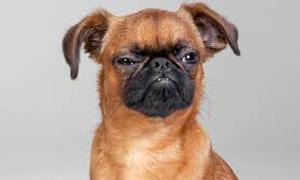 cane-adolescente-3-300x180