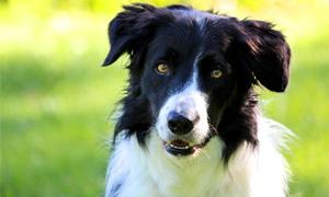 cane-adolescente-4-300x180