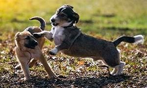 cane-adolescente-5-300x180