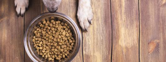 I 5 migliori mangimi per cani