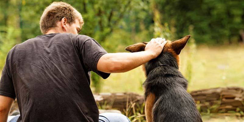 cane e lupo-12-800x400
