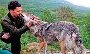 cane e lupo-2-300x180