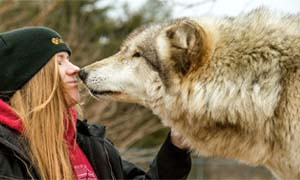 cane e lupo-4-300x180