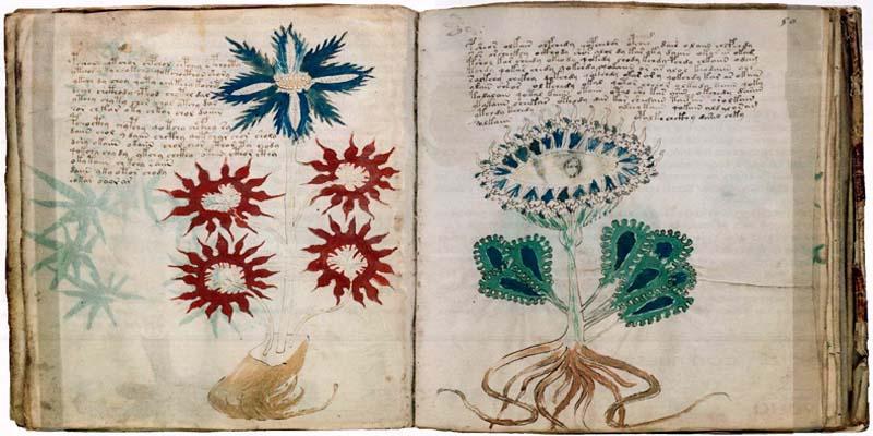 manoscritto Voynich1-800x400